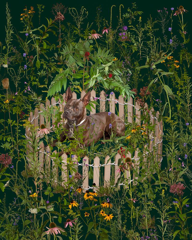 Captivity by Morgan Barry