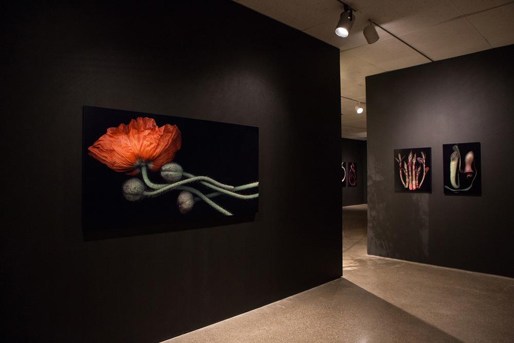 Hiberna Floris Exhibition 2