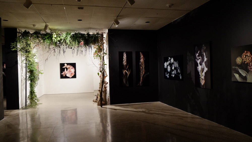 Hiberna Floris Exhibition 3