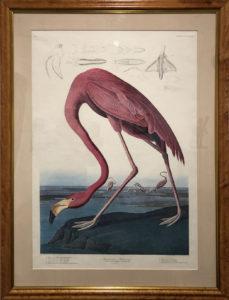 The American Flamingo Image